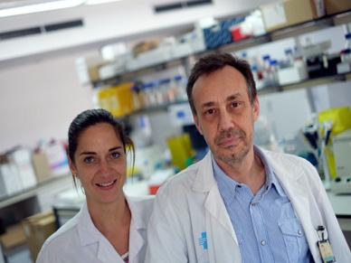 Un grup de la URV investiga com revertir la diabetis mitjançant l'estudi de cèl·lules mare